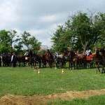2010. június 20. - Fogathajtó verseny