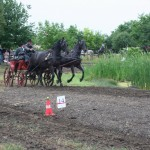2011. június 19. - Fogathajtó verseny